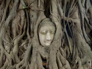 statue dans un arbre